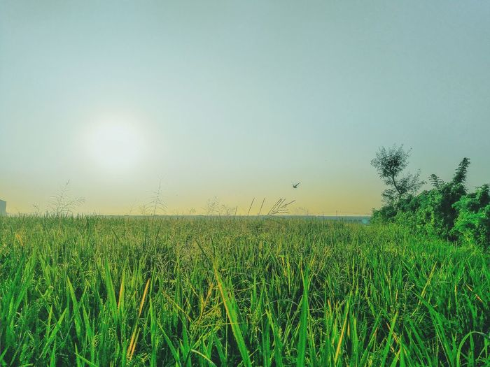 Cereal Plant Tree Rural Scene Agriculture Field Clear Sky Crop  Tea Crop Sky Grass Irrigation Equipment Agricultural Equipment Combine Harvester Harvesting Farmland