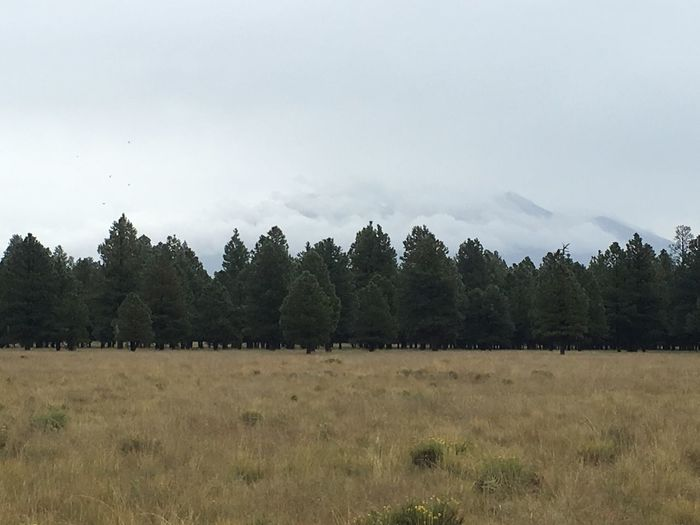 Mountains covered in clouds. Landscape Tranquil Scene Tree Grass Field Beauty In Nature Nature Non-urban Scene Sky Rural Scene Solitude Day Outdoors Arizona Humphrey's Peak Mountain Kaibab National Forest
