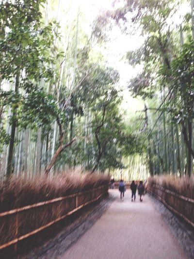Photo Bamboo Path