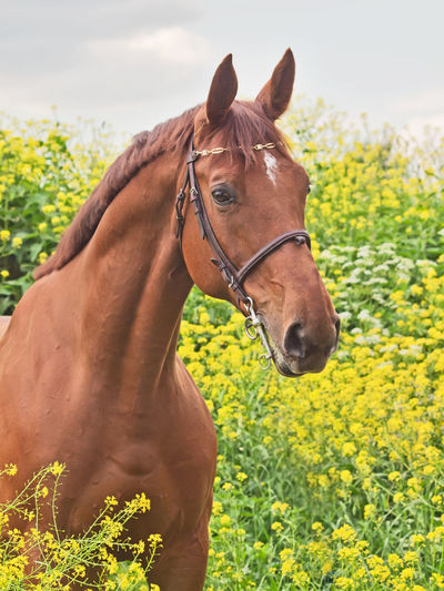 Animal Themes Brown Close-up Day Domestic Animals Grass Green Color Horse Mammal Mane Nature No People Outdoors Sky