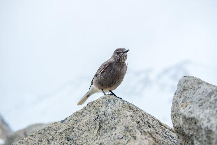 A close-up bird