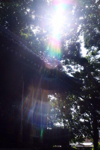 Tokyo Street Photography 足立区 氏神様