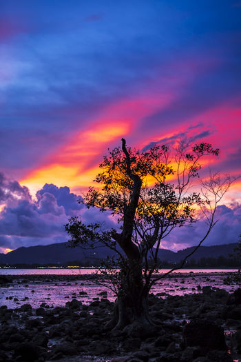 Fiery sunset with mangrove tree Fantasy Mangrove Tree Backdrop Background Beach Beauty In Nature Bright Lights Coastline Colorful Dramatic Sky Dust Effact Fiery Sunset... Landscape Nature Paradise Reflection Rock - Object Sea Sky Sunbeam Sunset Tree Tree Water