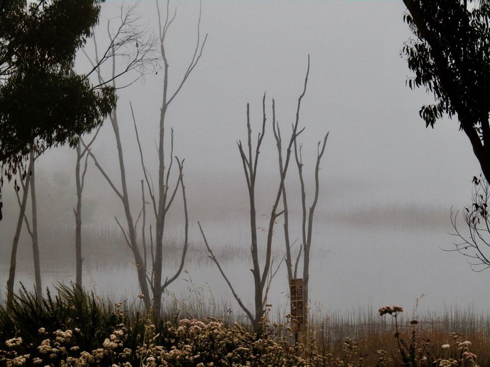 Fog Covered Lakes Tree Nature Outdoors Beauty In Nature No People Lake Water Otay Lake Chula Vista, CA California USA