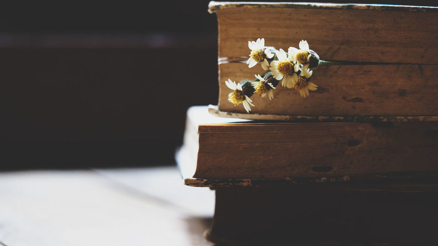 Blurred image, old book on wooden desk decorative with wild grass flowers, process with vintage color tone and grunge texture for romance memoirs of love and knowledge still life concepts backgrounds Flower Flowering Plant Wood - Material Plant Nature Close-up Freshness Beauty In Nature No People Indoors  Table Focus On Foreground Still Life Fragility Petal Vulnerability  Flower Head Day Flower Arrangement Knowledge Education Business Vintage Old Books Antique Aged Romance Memories Grunge Backgrounds Concepts Selective Focus Bookpage Paper Blurred Background Back To School Learning Research Classic Wisdom Text Book Space For Text Reading Brown Workplace Desk darkness and light Ancient History