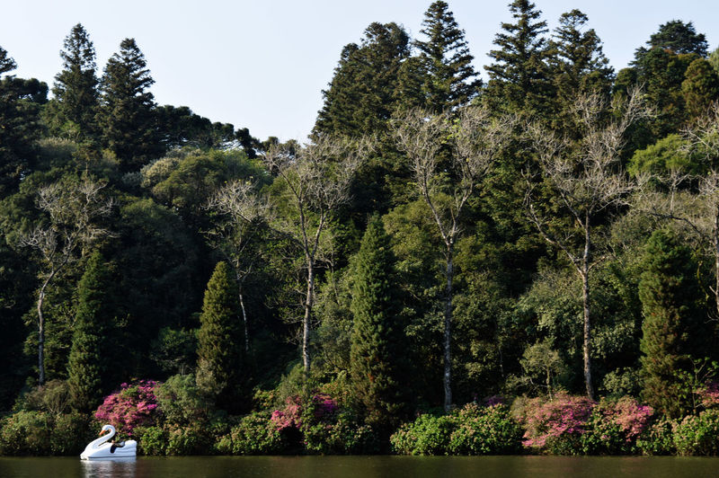 Brazil Gramado/RS Lago Negro Sunny Tourist Attraction  Beauty In Nature Day Flowers Forest Green Color Growth Lake Nature No People Outdoors Pedalinho Plant Rio Grande Do Sul  Scape Sky Tourism Tourist Destination Tranquil Scene Tranquility Tree The Week On EyeEm Done That.