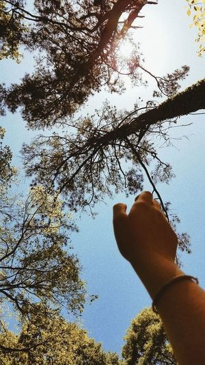 Low angle view of person hand holding tree against sky