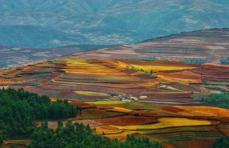 Yunnan China Photos Landscape_photography Landscape_Collection China Terraced Field Mountain Multi Colored Rice Paddy Rural Scene Agriculture Field Autumn Farm High Angle View Patchwork Landscape Rolling Landscape View Into Land Mountain Ridge Rice - Cereal Plant Cultivated Land