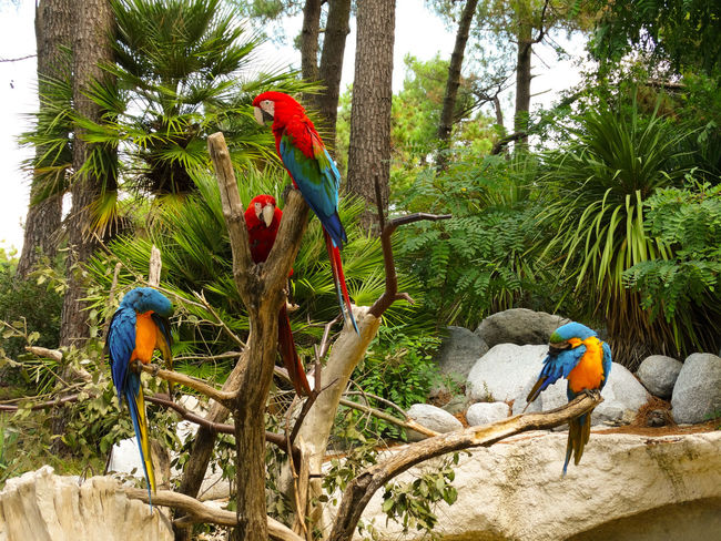 Parrots Beauty Of Nature Colors Explosion Of Color Parrots Parrot Bird Colorful colour of life Colors Of Nature Tropical Bird Feather