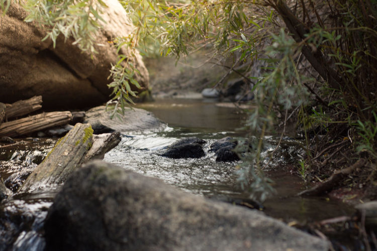 Castlewood Canyon State Park Colorado Colorado Photography Morning Nature Summertime River Streamzoofamily Summer Water