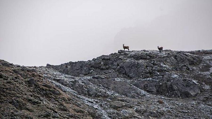 Scuol Fuorcla Da  Rims switzerland grisons animal mountains rock landscape nikon nikonphotography @wildlifeplanet