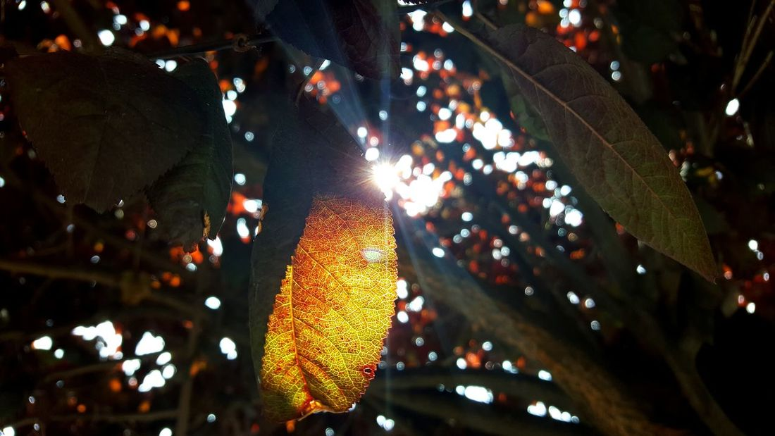 Powerful Light: paikura Low Angle View Tree Outdoors Freshness AMPt_community Eye4photography  Nature Trees