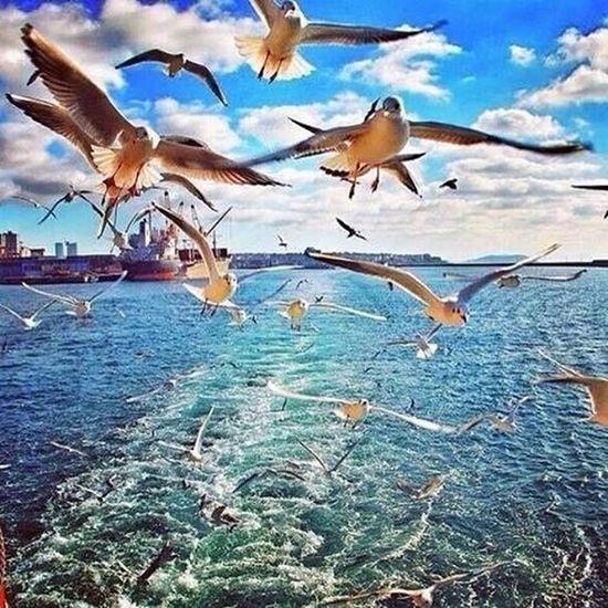 istanbul Citylife Birds Martilar Sea City Turkey Sky Clouds トルコ Kuslar Mavi 土耳其 турция турецкий Travel мечеть праздник аксарай птица Travel イスタンブール Bulut птицы теңізде туристік burung cami laut shipping