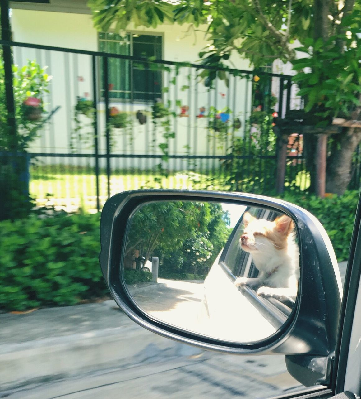 side-view mirror, car, transportation, real people, mode of transport, land vehicle, one person, road, day, mirror, outdoors, vehicle mirror, lifestyles, tree, nature, young adult, close-up, people