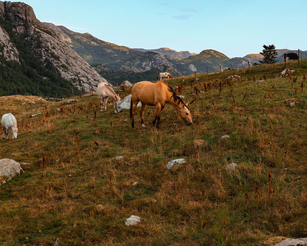 Horse EyeEm Selects Mountain Full Length Agriculture Sky Grass Livestock Farmland Mountain Range Field Agricultural Field Growing Horse Cultivated Land Plough Rocky Mountains
