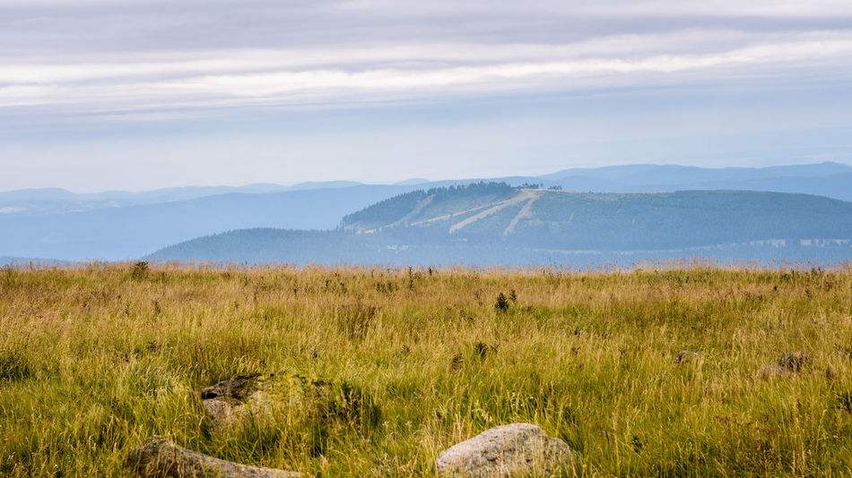 Brocken Mountain View - Harz Mountains Animal Themes Beauty In Nature Brocken Cloud - Sky Day Field Grass Growth Landscape Mammal Mountain Mountain Range Nature No People Outdoors Saxony Anhalt Scenics Sky Tranquil Scene Tranquility Water