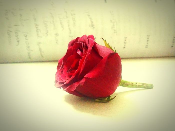 Red Rose Randomshot Felling Awesome Eyeem Flower Lover !!!!😛😜😎😋 A New Beginning EyeEmNewHere