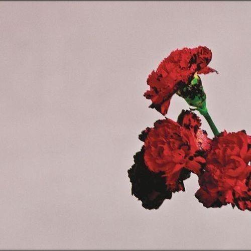 John Legend Flowers
