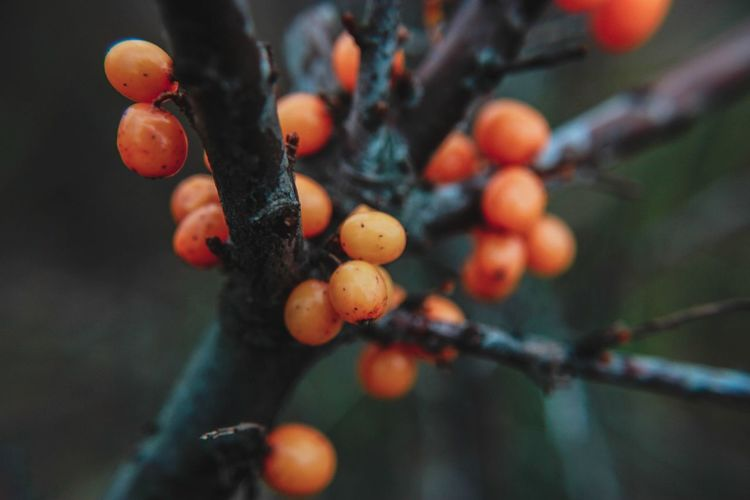 Close-up of berries on tree