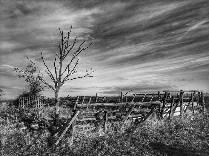 Sky Tranquility Outdoors Tranquil Scene Tree IPhone Cloud - Sky Early Morning Dramatic Sky Destruction Black & White HDR