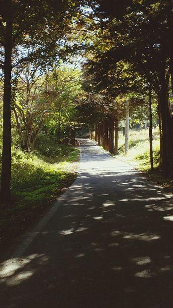 마곡사가는길 도중에 발견한 영은암 가는길... 예쁘다. Way Roadtrip ♥♥