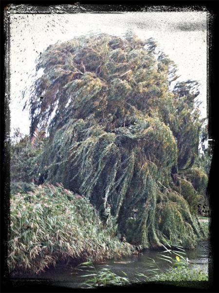 Autum wind TreePorn