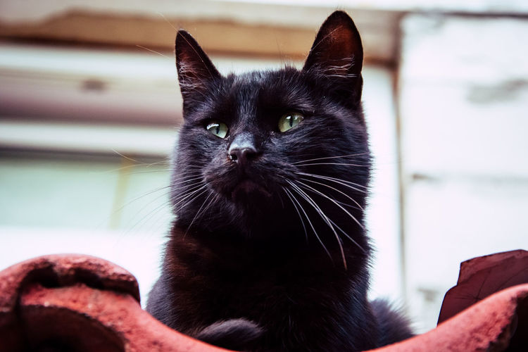 Photography Photooftheday Cat Nature Photography Naturelovers Nature EyeEm Nature Lover EyeEmNewHere Eyes Window Roof Pets One Animal Domestic Animals Animal Themes Black Color Domestic Cat Close-up Day No People