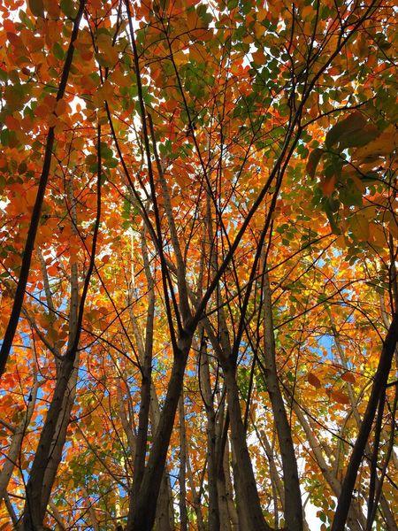 fall Fall Colors Autumn Autumn Colors Trees Autumn Leaves Houston Texas