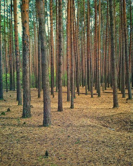 осень Лес краски  Autumn Nature Outdoor Forest Tree VSCO Vscocam Ig Trees