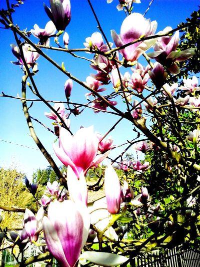 Spring Flowers Spring Flowers Pink Flower Garden Myhome