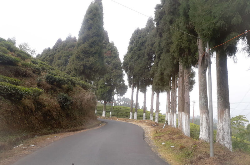 Empty road along trees and plants against sky