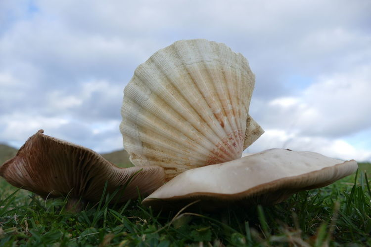 Close-up of seashell on field against sky