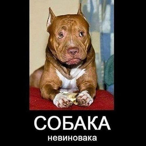 собака невиновака