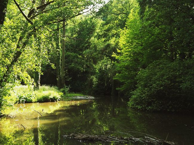 Beauty In Nature Day Foliage Forest Green Color Growth Lake Land Lush Foliage Nature No People Non-urban Scene Outdoors Plant Rainforest Reflection Scenics - Nature Tranquil Scene Tranquility Tree Water WoodLand