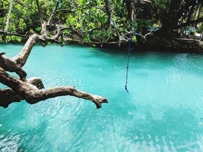 Water Tree Hanging Sea Fishing Close-up Rope Swing