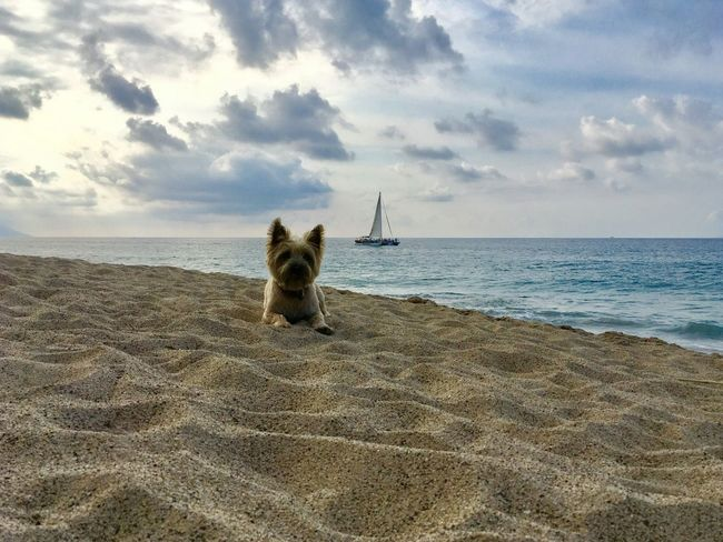 Beach bum 🐾 Beach Beach Photography Beach Life Beach Day Beach Time Beach Walk Beachlovers Dog On Beach Small Boat Sea And Sky Seascape Seaside Sea View Clouds And Sky Cairn Terrier Scottishterrier Vacation Holidays Sand Puppy Cloudy Sky 💙 Sailboat Tourism Destination Pet Travel No People