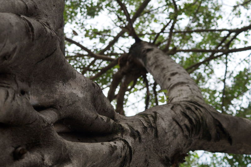 #branches #brown #villahermosa Close-up Day Low Angle View Outdoors Tree