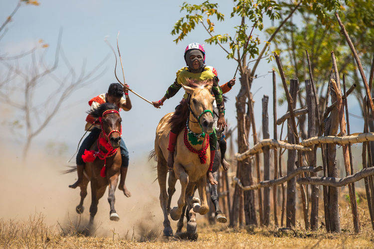 Sumbawa Besar, Nusa Teggara Barat, Indonesia - September 21, 2017: Local horse race competition held on Sumbawa Besar, Indonesia on September 21, 2017. Barapan Kuda Children Horses INDONESIA Kids Local Sumbawa Sumbawa Besar TRENDING  Tradition Travel Competition Culture Equestrian Equine Equine Photography Festival Horse Racing Mammal Outdoors Speed Traditional Travel Destinations