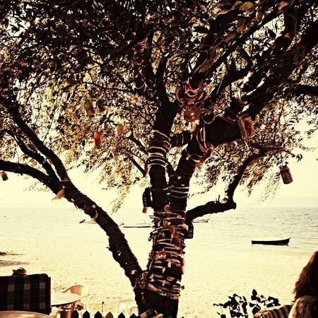 Wish Tree Hello World Seaside Beautiful Sunset