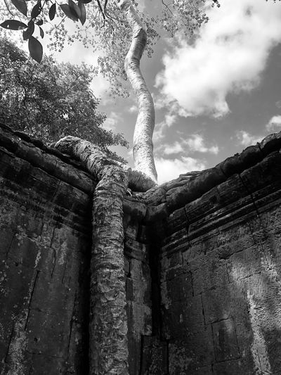 Low angle view of a statue against trees