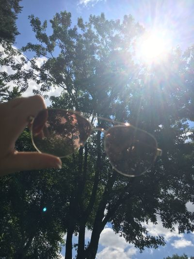 Tree Low Angle View Sun Lens Flare Sunbeam One Person Sunlight Day Sky Growth Nature Outdoors Branch Tree Trunk Human Body Part Beauty In Nature Human Hand
