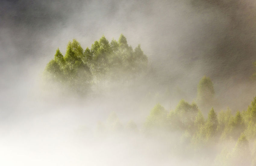 foggy morning in Apuseni Mountains Beauty In Nature Day Fog Forest Growth Mist Nature No People Outdoors Power In Nature Scenics Sky Sunrise Tranquil Scene Tranquility Tree Weather