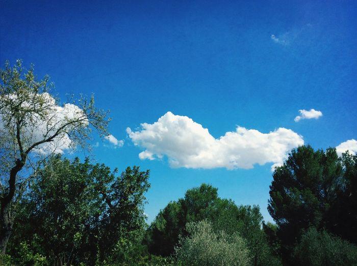 Taking Photos @ Ibiza Summer 2014 Crocodile Sun_collection, Sky_collection, Cloudporn, Skyporn