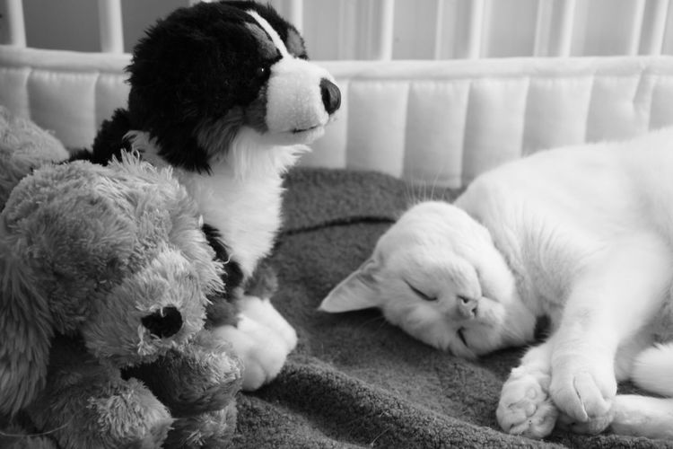 Cat Black And White Pets Sleeping Lazy Danger Enemies Living Dangerously Cats And Dogs Uhoh Trust Truss