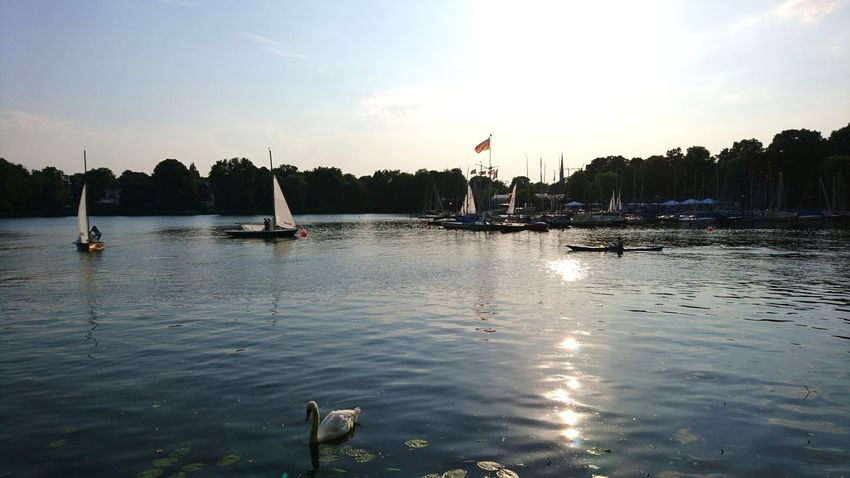 Alster with swan. Hamburg Germany Hh Alster Alster River Water Waterfront Swan Swans Swans ❤ Clouds And Sky Sunset Sun Urban Nature Reflection Boat Boats Water Swimming Tree Swimming Pool Palm Tree Nautical Vessel Flag Floating On Water Swan Summer