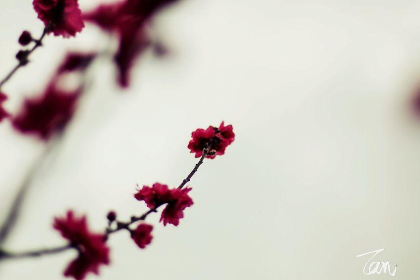 摄影 大光圈 花卉 佳能 Plant Large Aperture Canon Scenery Photography