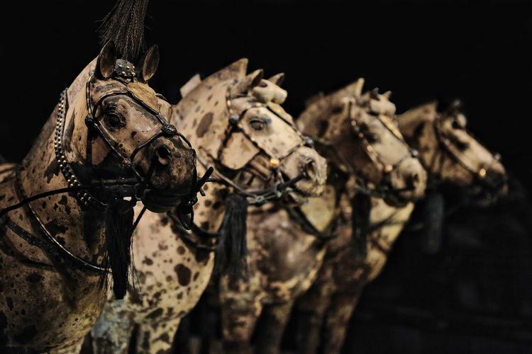 1462 horse set-terracotta funerary statuary depicting qin shi huang emperor's army. xian-china.