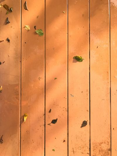 Full Frame Backgrounds No People Day Outdoors Close-up Nature Wood Leaf The Week On EyeEm EyeEmNewHere