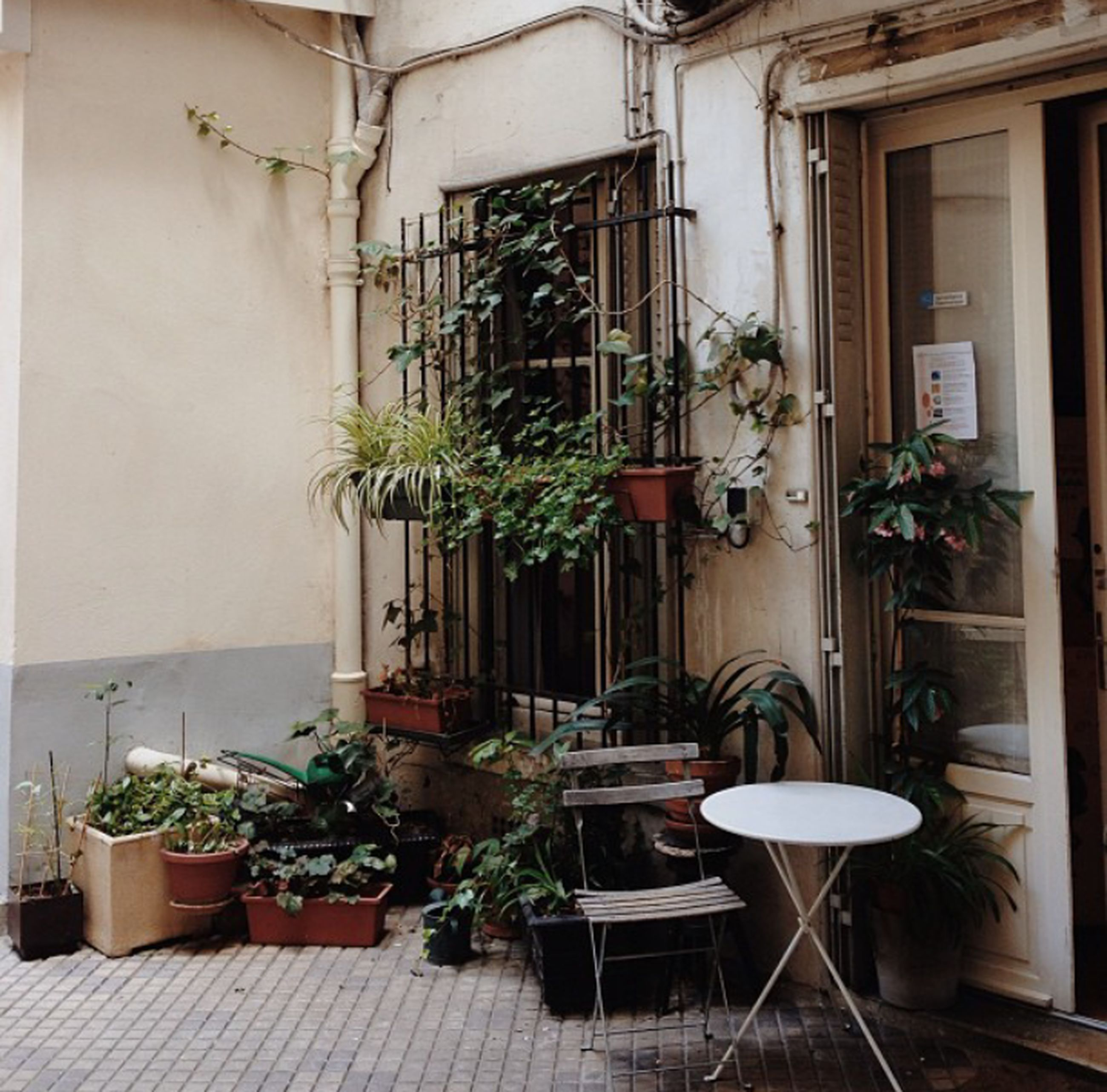 potted plant, architecture, built structure, plant, building exterior, growth, house, window, flower pot, pot plant, wall, residential structure, chair, no people, green color, day, door, residential building, balcony, wall - building feature