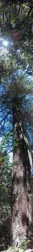 If you look closely you'll see the lightning strike A Beautiful Day Tree_collection
